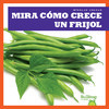 Cover: Mira cómo crece un frijol (Watch a Bean Grow)
