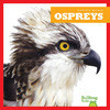 Cover: Ospreys