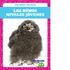 Cover: Los búhos nivales jóvenes (Snowy Owlets)