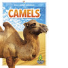Cover: Camels