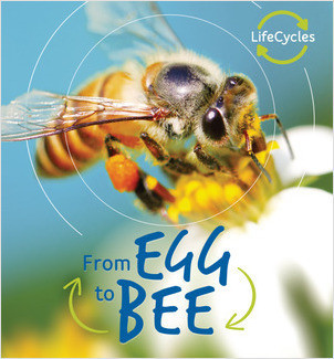 Cover: From Egg to Bee
