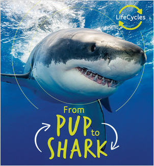 Cover: From Pup to Shark