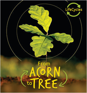 Cover: From Acorn to Tree