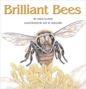 Cover: Brilliant Bees