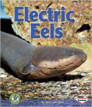 Cover: Electric Eels