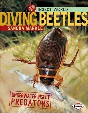 Cover: Diving Beetles: Underwater Insect Predators