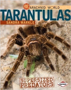 Cover: Tarantulas: Supersized Predators