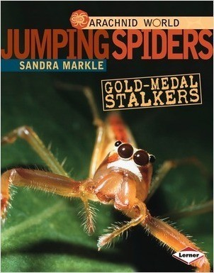 Cover: Jumping Spiders: Gold-Medal Stalkers