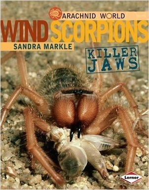 Cover: Wind Scorpions: Killer Jaws