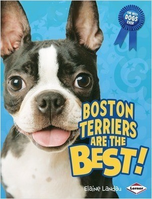 Cover: Boston Terriers Are the Best!