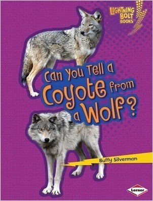 Cover: Can You Tell a Coyote from a Wolf?
