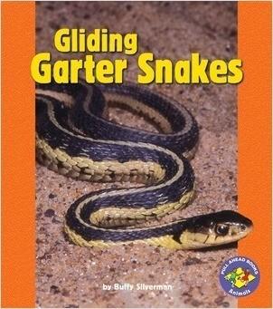Cover: Gliding Garter Snakes