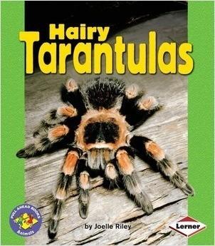 Cover: Hairy Tarantulas