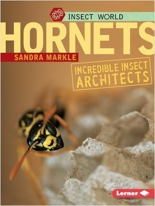 Cover: Hornets: Incredible Insect Architects