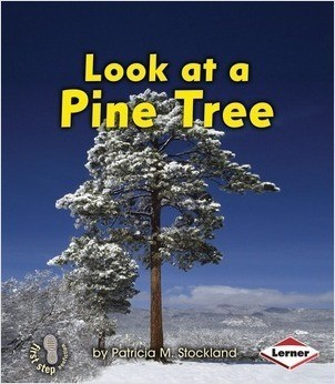 Cover: Look at a Pine Tree