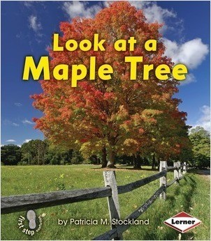 Cover: Look at a Maple Tree