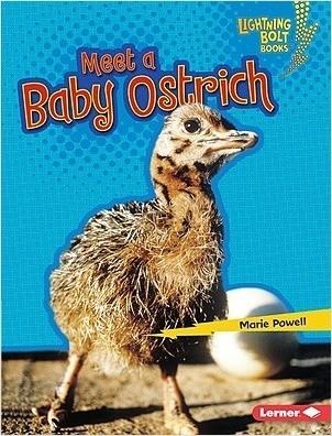 Cover: Meet a Baby Ostrich