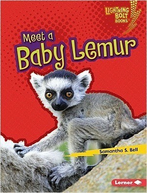 Cover: Meet a Baby Lemur