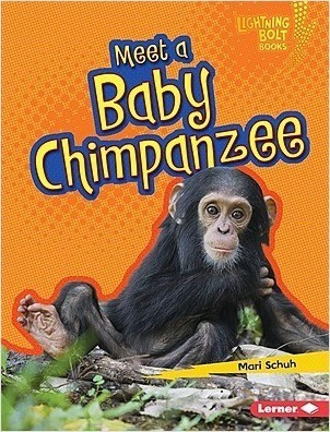 Cover: Meet a Baby Chimpanzee