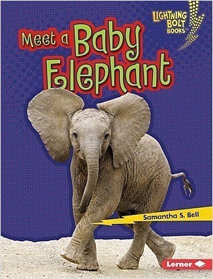 Cover: Meet a Baby Elephant