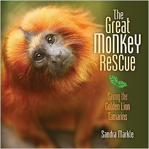 Cover: The Great Monkey Rescue: Saving the Golden Lion Tamarins