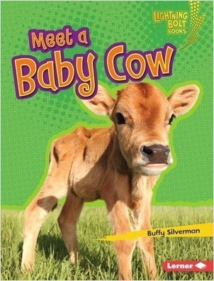 Cover: Meet a Baby Cow