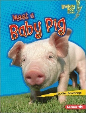Cover: Meet a Baby Pig
