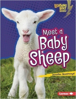 Cover: Meet a Baby Sheep