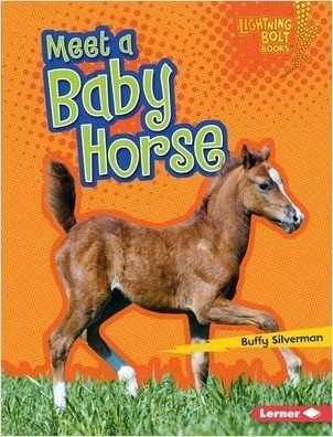 Cover: Meet a Baby Horse