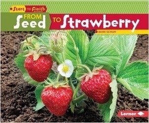 Cover: From Seed to Strawberry