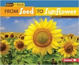 Cover: From Seed to Sunflower