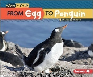 Cover: From Egg to Penguin