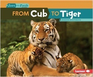 Cover: From Cub to Tiger