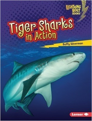 Cover: Tiger Sharks in Action