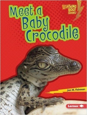 Cover: Meet a Baby Crocodile