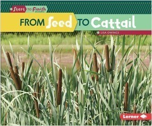 Cover: From Seed to Cattail