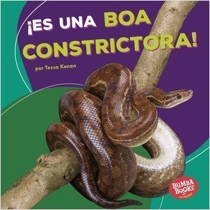 Cover: Bumba Books ™ en español — Animales de la selva tropical (Rain Forest Animals) — Library Bound Set