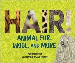Cover: Hair!: Animal Fur, Wool, and More