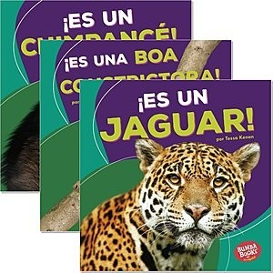 Cover: Bumba Books ™ en español — Animales de la selva tropical (Rain Forest Animals) — Hardcover Set