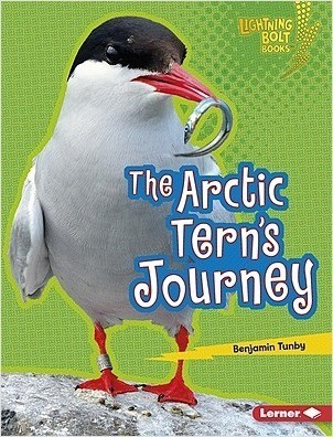 Cover: The Arctic Tern's Journey