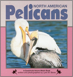 Cover: North American Pelicans