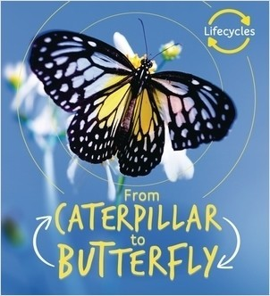 Cover: Caterpillar to Butterfly