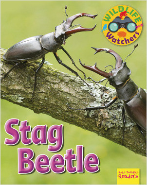 Cover: Stag Beetle