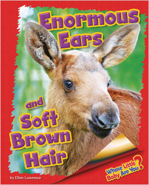 Cover: Enormous Ears and Soft Brown Hair (Moose)