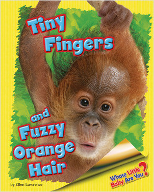 Cover: Tiny Fingers and Fuzzy Orange Hair (Orangutan)