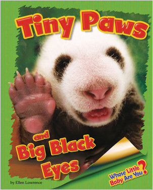 Cover: Tiny Paws and Big Black Eyes (Giant Panda)