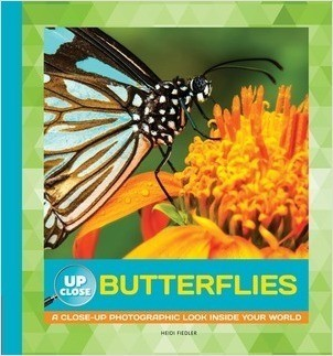 Cover: Butterflies: A Close-up Photographic Look Inside Your World