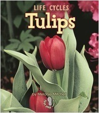 Cover: Tulips