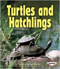 Cover: Turtles and Hatchlings