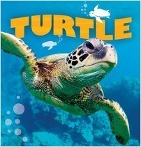 Cover: Turtle